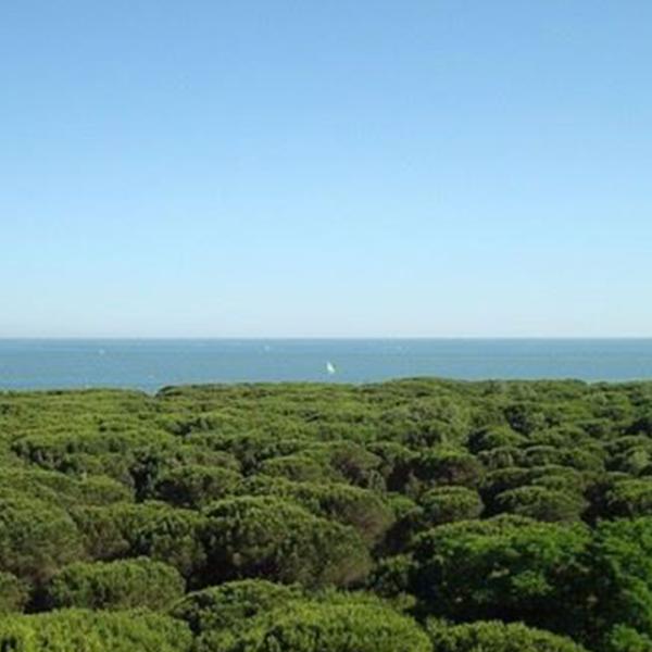 Il mare azzurro oltre le dune di tamerici